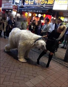 渋谷 白熊