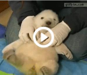 白熊 赤ちゃん